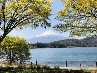 自然,風景,空,富士山,屋外,湖,山,景色,樹木,新緑