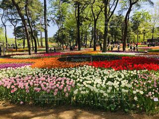 自然,風景,空,花,屋外,景色,チューリップ,ブルー,ネモフィラ,国営ひたち海浜公園