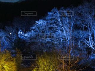 温泉,夜,森,青,樹木,ライトアップ