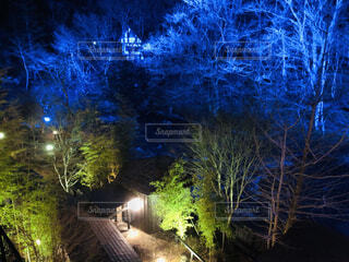 温泉,夜,森,青,樹木,ライトアップ,貸し切り温泉