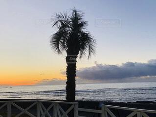 水に沈む夕日の写真・画像素材[4393279]