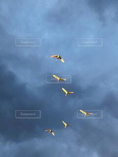 鳥の群れの写真・画像素材[4406516]