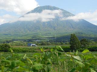 自然,風景,空,緑,雲,北海道,山,景色,草,草木,羊蹄山