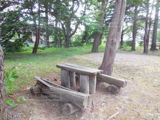 公園,屋外,ベンチ,テーブル,樹木,遊び場,草木,休息