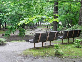 知事公館の公園のベンチの写真・画像素材[4379445]