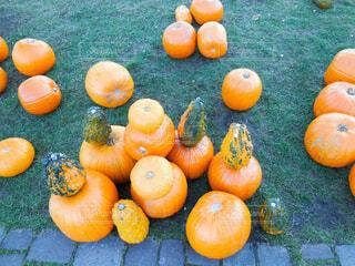 食べ物,秋,植物,オレンジ,果物,野菜,ハロウィン,かぼちゃ,パンプキン,南瓜,ハロウィーン,カボチャ,pumpkin,セイヨウカボチャ