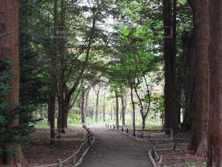 森林の中の散歩道の写真・画像素材[4383394]