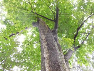 空,木,屋外,緑,光,樹木,キラキラ,木洩れ陽,草木,休息
