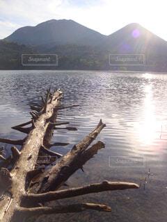 湖の浅瀬に倒れた木の写真・画像素材[4400309]