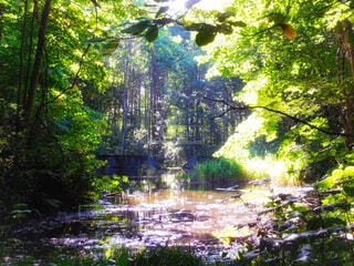 森の中の池の写真・画像素材[4402422]