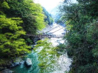 祖谷のかずら橋の写真・画像素材[4406827]