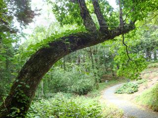 おじぎをしている樹の写真・画像素材[4411081]