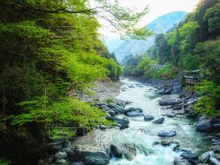 かずら橋から眺めた祖谷渓の写真・画像素材[4412014]