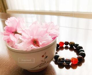 摘んできた桜とお気に入りの石の写真・画像素材[4425427]