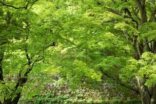 びわ湖疏水の新緑の写真・画像素材[4381721]
