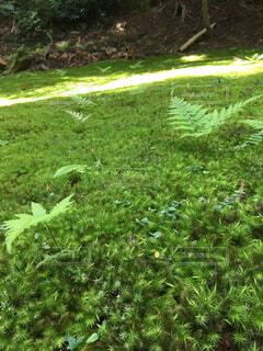 屋外,緑,光,草,苔,寺,草木,moss