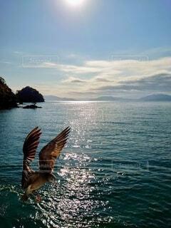自然,海,空,動物,鳥,屋外,雲,水面