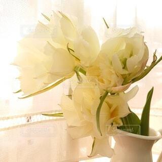 花,屋内,花瓶,チューリップ,八重