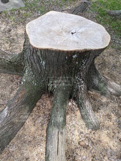 自然,屋外,大木,樹木,切り株,驚き,年輪,タコ足,たこあし