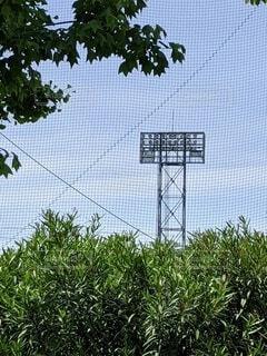 屋外,緑,青空,樹木,照明,快晴,野球場,草木,日中