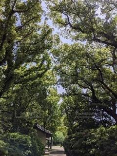 木のトンネルの写真・画像素材[4397554]