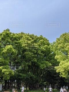 木と空の写真・画像素材[4397552]