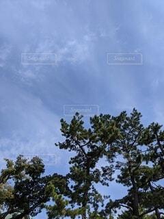 空とみどりの写真・画像素材[4408959]