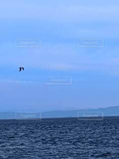 海の上を飛んでる鳥の写真・画像素材[4838577]