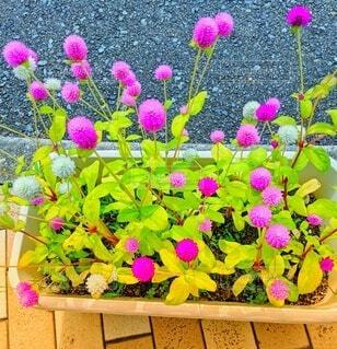 ピンクの花の写真・画像素材[4871112]