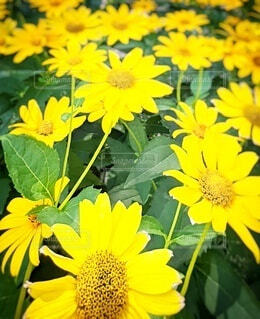 黄色い花の写真・画像素材[4871111]
