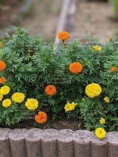かわいい花の写真・画像素材[4871127]