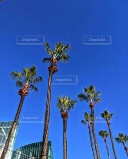 ヤシの木の写真・画像素材[4894683]