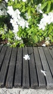 花,屋外,観葉植物,木目,草木