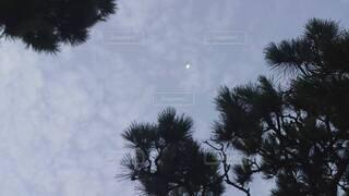 自然,空,屋外,雲,樹木,月,ヤシの木,草木