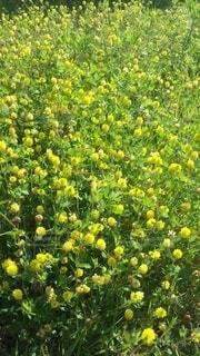 花のクローズアップの写真・画像素材[4402437]