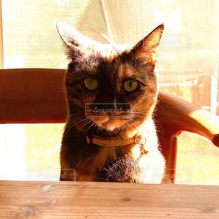 猫,かわいい,日光浴,可愛い,目,雑種,日当たり