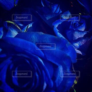 花,屋外,青,バラ,薔薇,外,草木,映え,青バラ,エレクトリックブルー