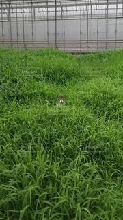 猫,屋外,緑,草,新緑,原っぱ,空き地,ひょっこり,草木
