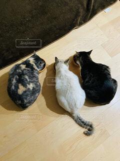 猫,動物,黒,ねこ,床,食事中,エサ,3匹,ネコ,三匹,ねこちゃん,仲良く食事,多頭猫,3匹の猫,3匹ねこ,三匹のねこ,3匹ネコ