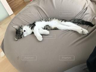 猫,動物,屋内,かわいい,寝転ぶ,ねこ,寝る,子猫,ソファ,眠る猫,気持ちよさそう,くつろぐ猫,猫をダメにするソファ,ビーズクッション,白黒猫,眠るねこ,白黒ねこ,くつろぐねこ,くつろぐネコ,くつろぎ猫,白黒ネコ,人をダメにするソファ,横たわる猫