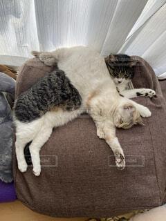 重なりあう猫の写真・画像素材[4391860]