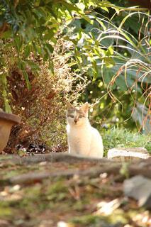 座っている猫の写真・画像素材[4404123]