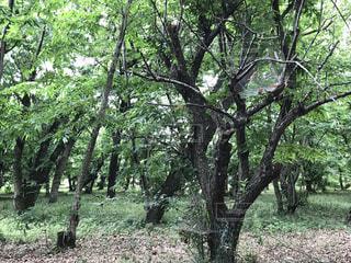 自然,公園,森林,屋外,森,山,登山,草,大自然,樹木,癒し,草木