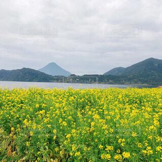 自然,風景,空,花,屋外,湖,雲,菜の花,山,景色,草,新緑,草木