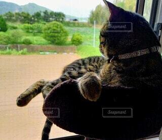 猫,動物,景色,窓の外,黄昏る