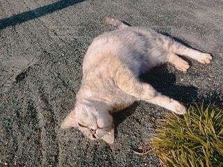 猫,動物,屋外,かわいい,景色,地面,日向ぼっこ