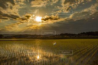 田んぼに沈む夕陽の写真・画像素材[4405509]