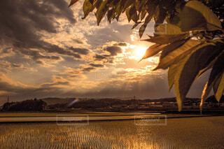 田んぼに沈む夕陽の写真・画像素材[4405508]