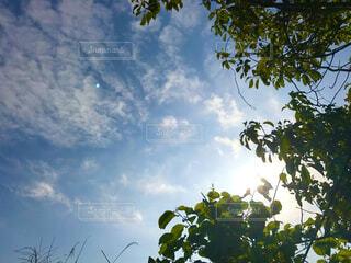 木漏れ日と空の写真・画像素材[4424235]