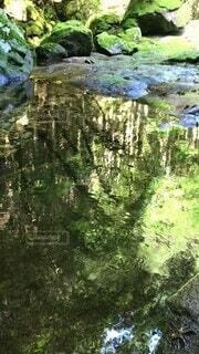 自然,緑,綺麗,晴れ,水,川,景色,美しい,樹木,リフレクション,昼間,渓流,沢,清流,山中,水流,日中,流水,山奥,フィトンチッド,鏡像,緩やか